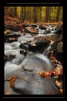 The creek in autumn by dynkavit