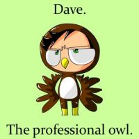 Dave. The Professional Owl. by CrossDaBowmn
