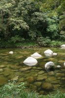 Mossman Gorge.1 by Mind-Matter