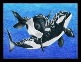 Orcas by HermosaG