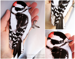 downy woodpecker by mybirdy
