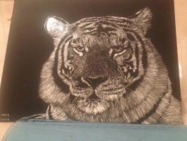 Scratchboard:Tiger 2 by PeachBerryDivision