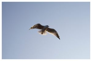 A Seagull by ithr0n