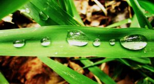 Water Droplets by AliciaRoseRuth