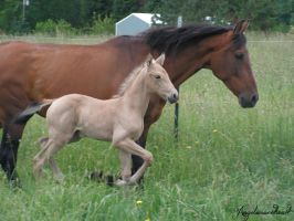 Mare and Foal by Angelicsweetheart