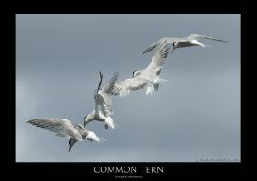 Tern.3 by THEDOC4