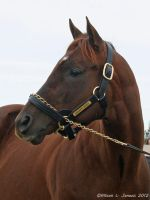 SMARTY JONES NORTHVIEW 2 by Prairie-Bayou