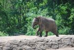 african elephant 3.3 by meihua-stock