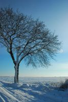 winter tree by Wilithin