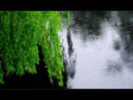 Weeping Willow by moonfullofstars
