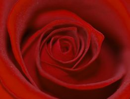 Valentines Rose by Faith-giver