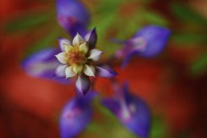 Lupine II by theonlysong