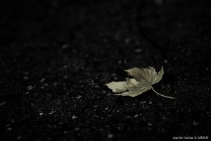 Lonely by ciprinel