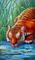 Tigre sediento by Real-Warner