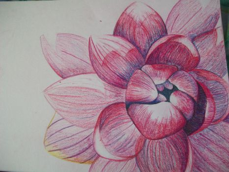 WaterLilly drawing by twinkerbell2791