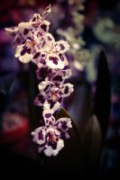 orchids by nprkr
