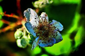 a dying wild flower by speed-demon