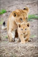 Lion Cub Walking by MrStickman