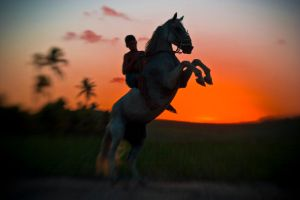 lensbaby horse by poivre