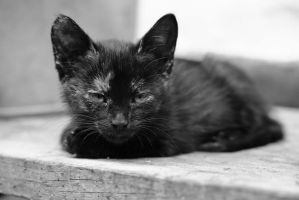 cat by Lonely-black-cat