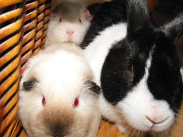 our rabbit with his friends by Trea1969