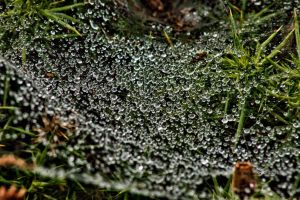Dew by forgottenson1