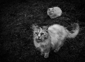 Street Cats by narvils
