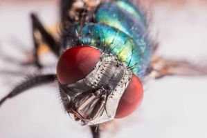 Fly Supermacro #2 by fti7