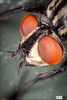Fly up close by jeje-je