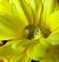 Tears of summer by Tricia-Danby