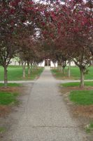 Tree Lined Path by advs14u2nv