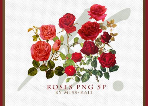 Roses Png by MISS-K611