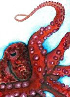 Octopus Watercolour by Midair510