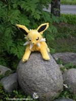 Wild Jolteon Appeared by Tedimo