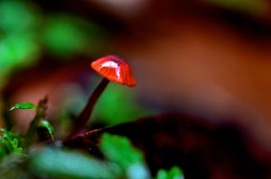 Tiny Mushroom by LacunaRes