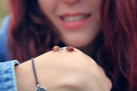 Coccinelles by Adripics