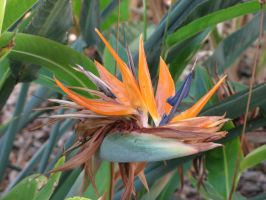 Bird Of Paradise by Dreyco