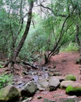 Forest Path Creek by OneofakindKnight