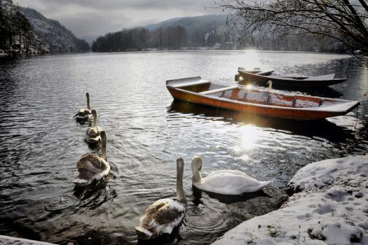 Winter and swans by tomsumartin