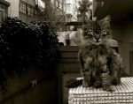 serious cat by contemporaryhart