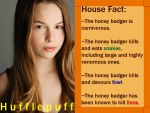 House Fact: Hufflepuff by InfractiAngelus