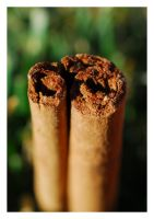 Cinnamon Stick by angelbabiau
