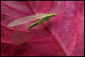 Green lacewing by Pildik