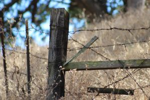 Fence 2 by Packrat17