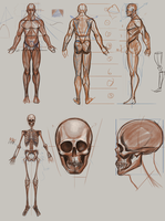 Anatomy Practice by BABAGANOOSH99