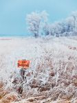 Frost by WayneBenedet