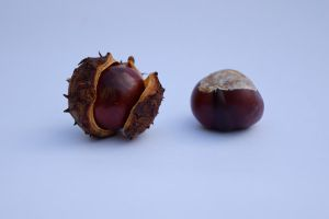 DSC 0022 Conker and Cupule by wintersmagicstock