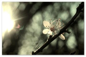 Early blossom? by Neutronstr