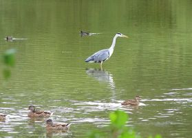 From heron in.... by chop-stock