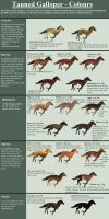 The Tanned Galloper - Coat Colors by TalonV